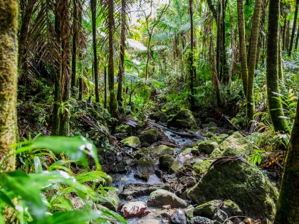 Enchantment – and Lesson in Humility – Hiking El Yunque Rainforest, Island of Puerto Rico